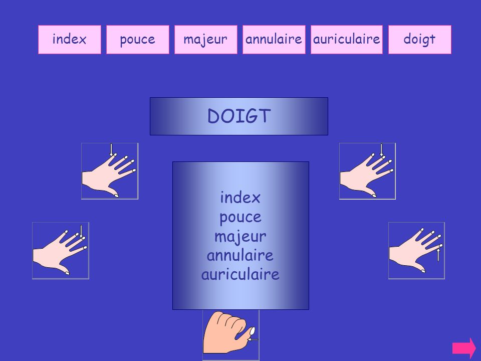 DOIGT index pouce majeur annulaire auriculaire index pouce majeur