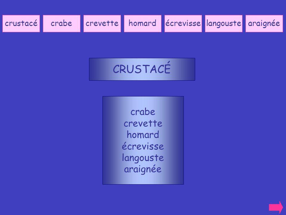 CRUSTACÉ crabe crevette homard écrevisse langouste araignée crustacé