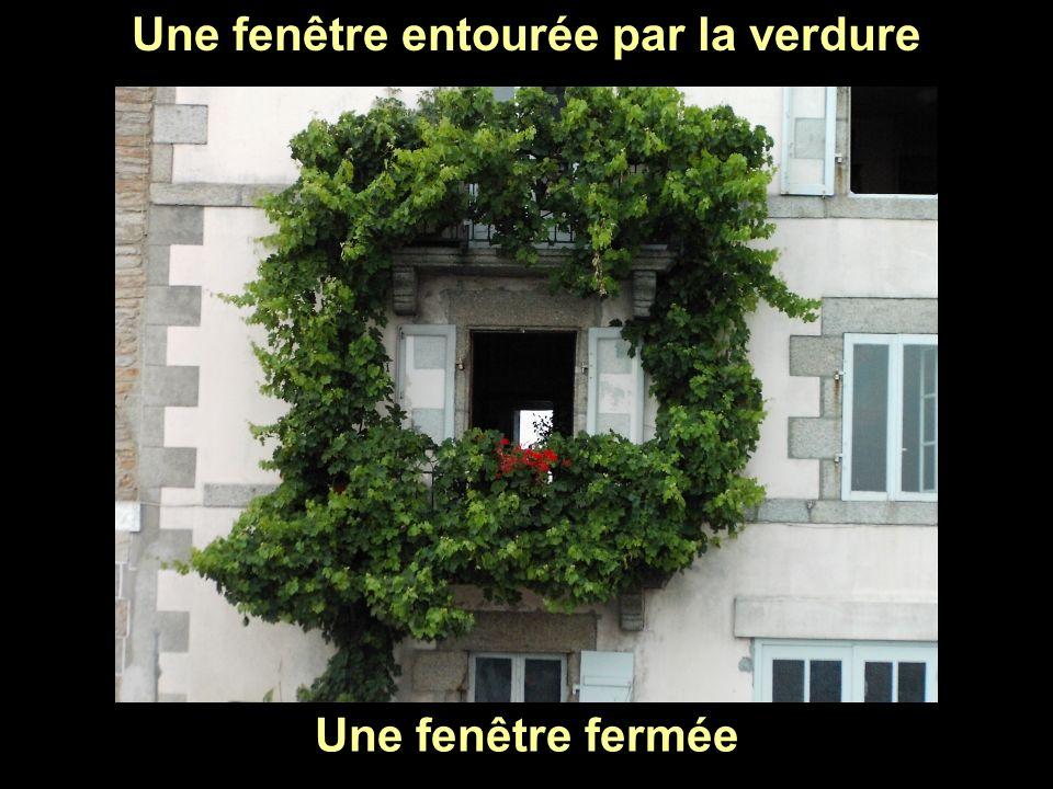 Une fenêtre entourée par la verdure