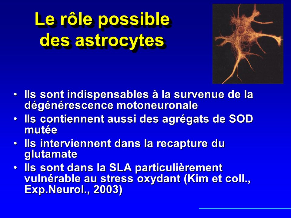 Le rôle possible des astrocytes