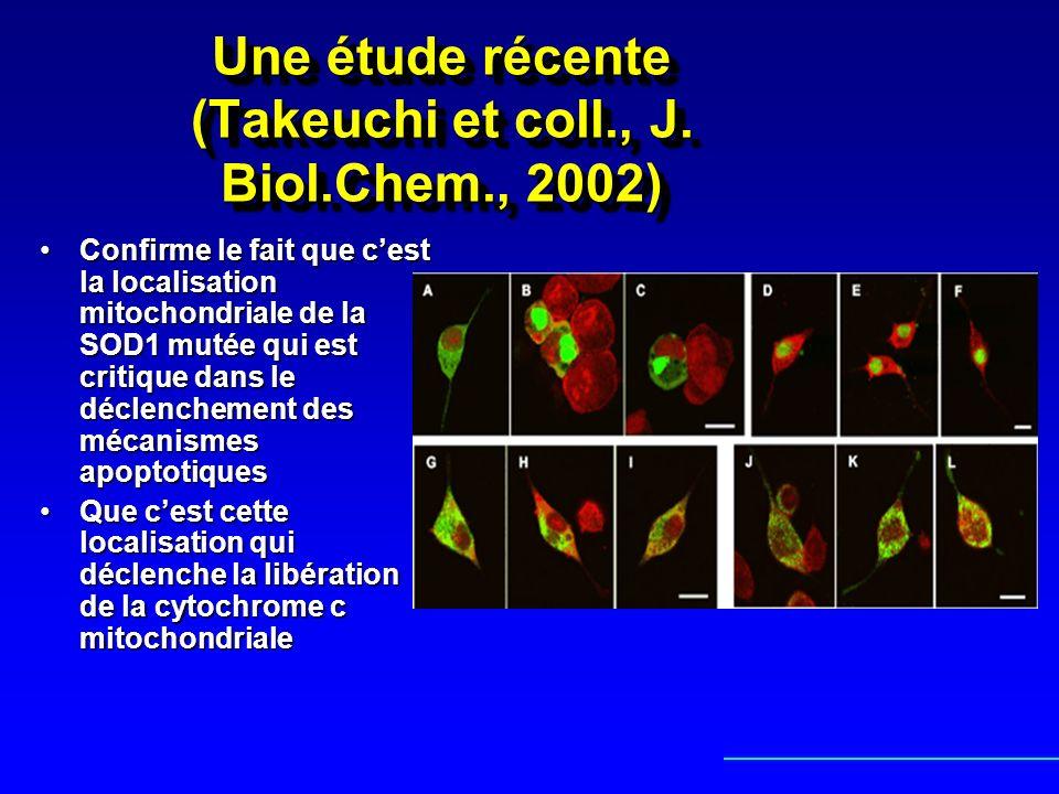 Une étude récente (Takeuchi et coll., J. Biol.Chem., 2002)