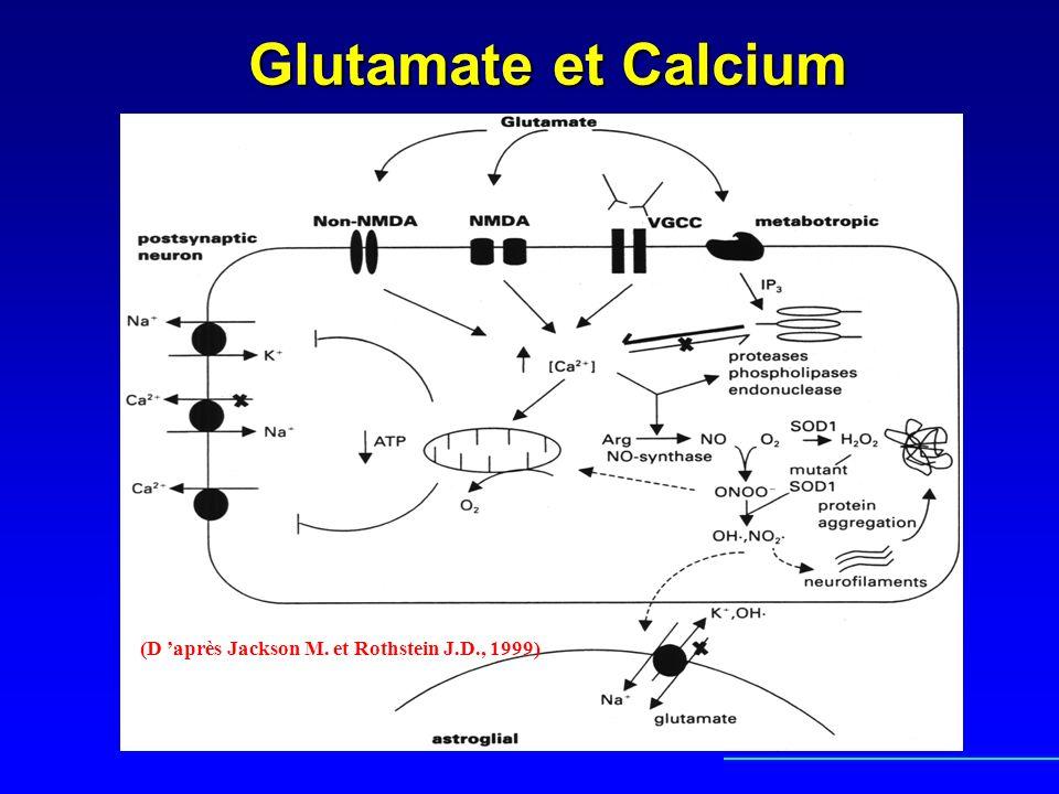 Glutamate et Calcium (D 'après Jackson M. et Rothstein J.D., 1999)