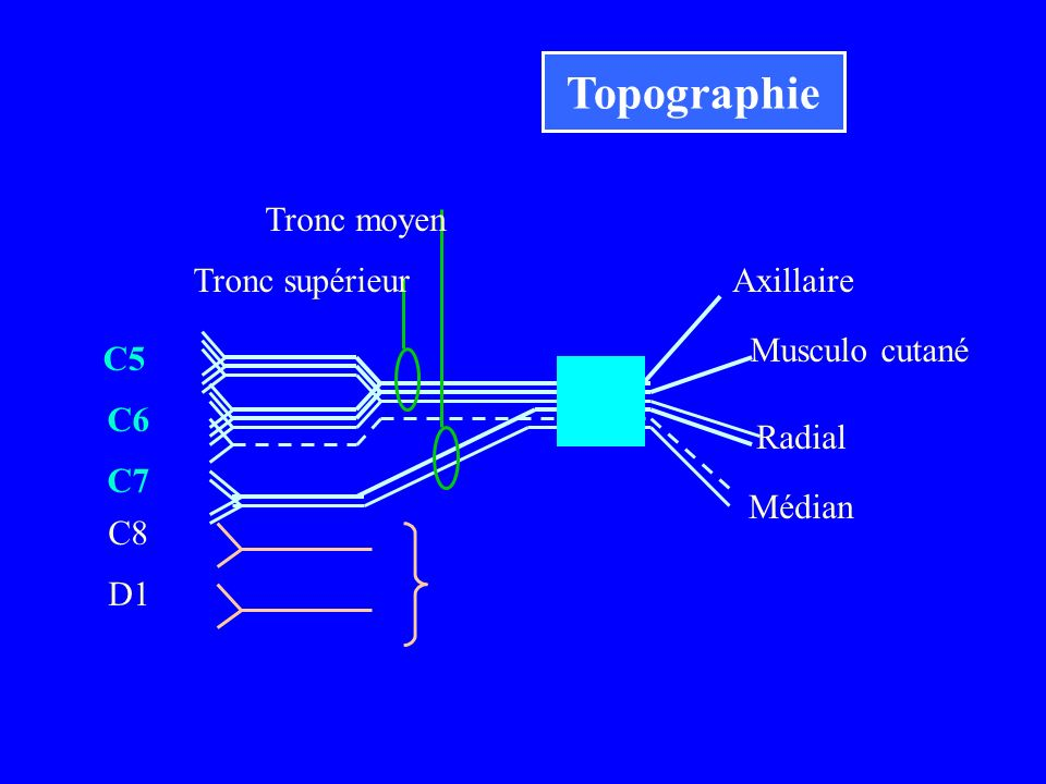 Topographie Tronc moyen Tronc supérieur Axillaire Musculo cutané C5 C6