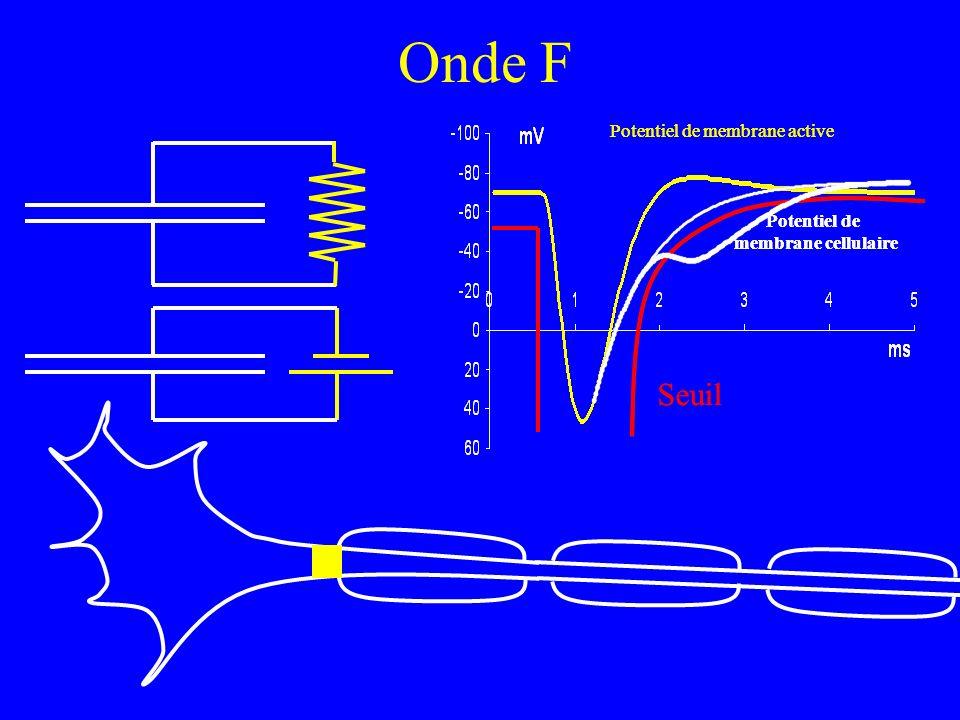 Onde F Seuil Seuil Potentiel de membrane cellulaire