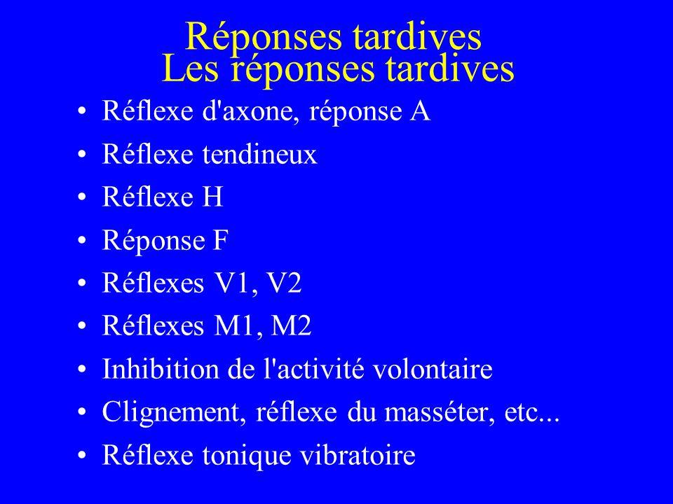 Réponses tardives Les réponses tardives Réflexe d axone, réponse A