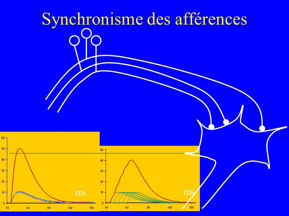 Synchronisme des afférences