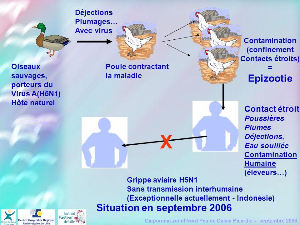 X Epizootie Situation en septembre 2006 Contact étroit Déjections