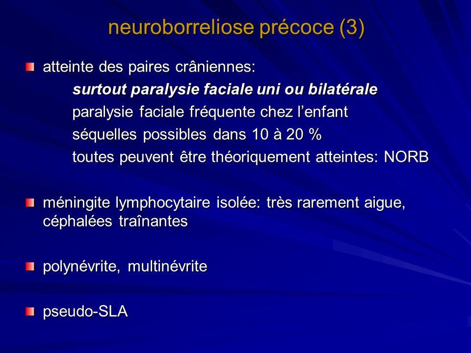 neuroborreliose précoce (3)