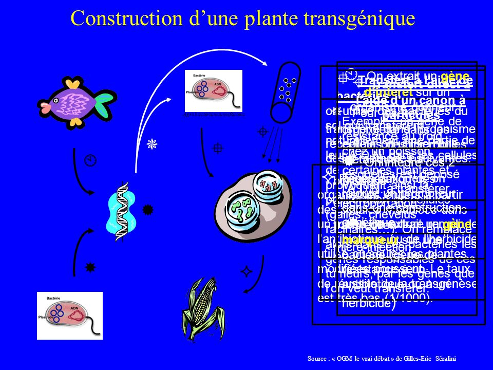 Construction d'une plante transgénique