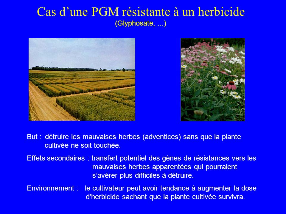 Cas d'une PGM résistante à un herbicide (Glyphosate, ...)