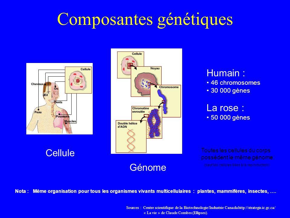Composantes génétiques