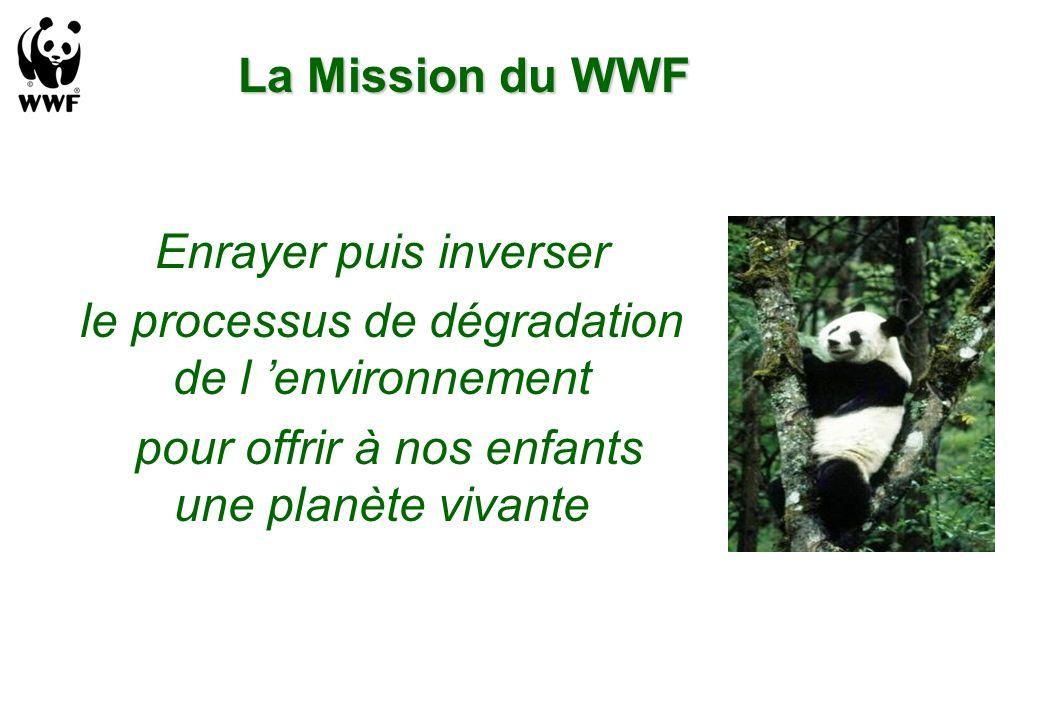 le processus de dégradation de l 'environnement