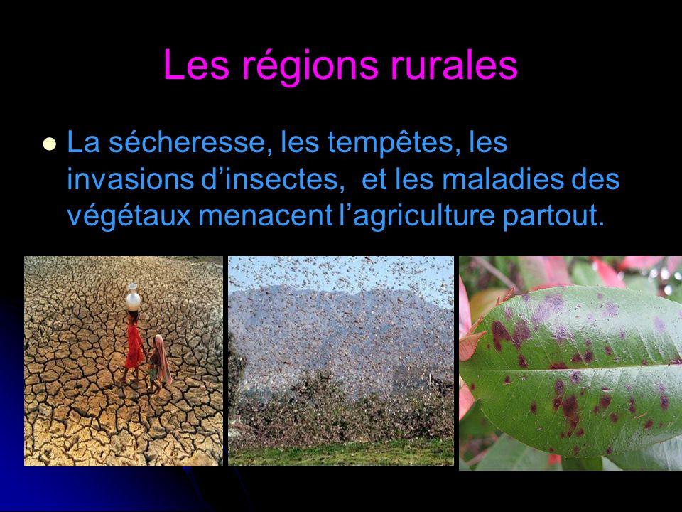 Les régions rurales La sécheresse, les tempêtes, les invasions d'insectes, et les maladies des végétaux menacent l'agriculture partout.