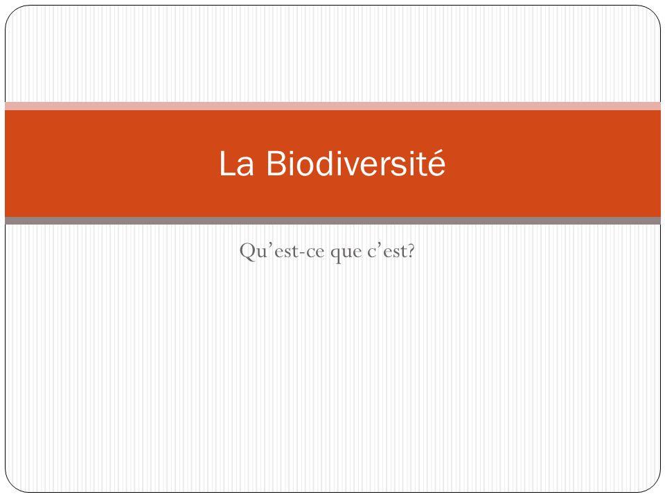 La Biodiversité Qu'est-ce que c'est