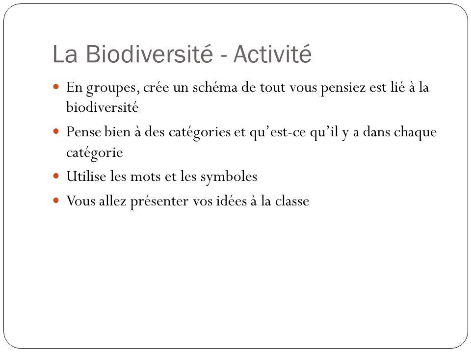 La Biodiversité - Activité