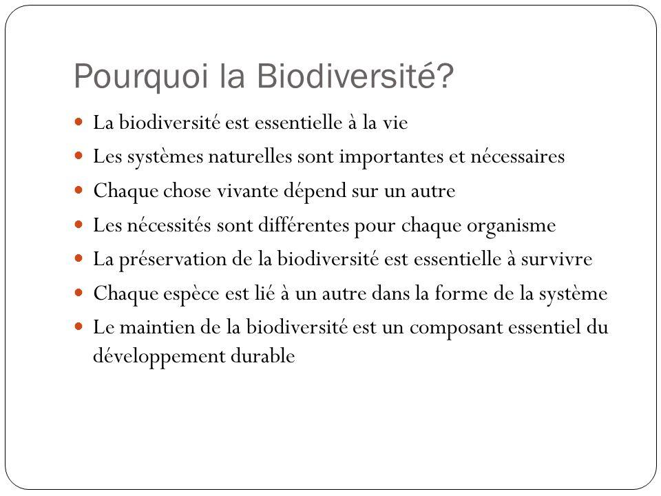 Pourquoi la Biodiversité