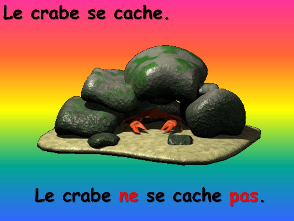 Le crabe se cache. Le crabe ne se cache pas.