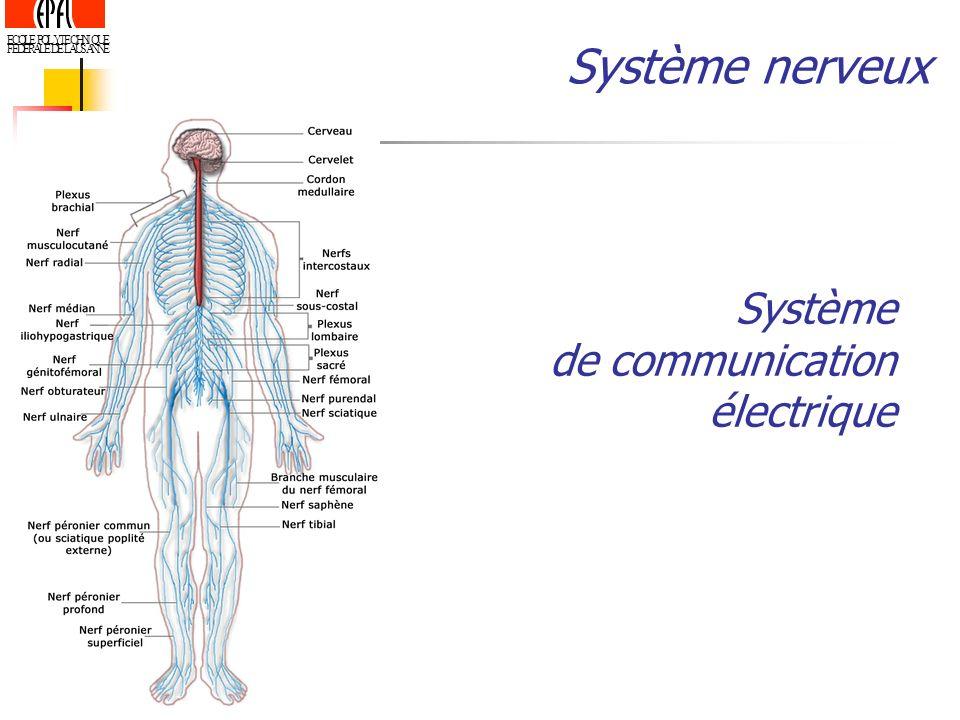 Système nerveux Système de communication électrique