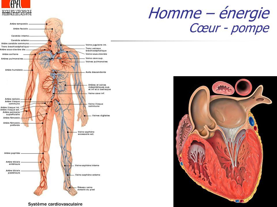 Homme – énergie Cœur - pompe