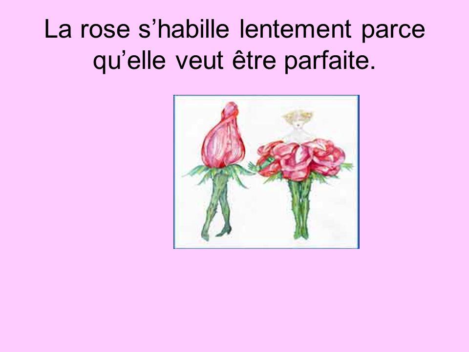 La rose s'habille lentement parce qu'elle veut être parfaite.