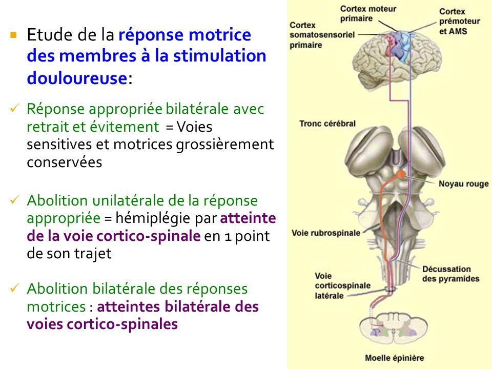 Etude de la réponse motrice des membres à la stimulation douloureuse: