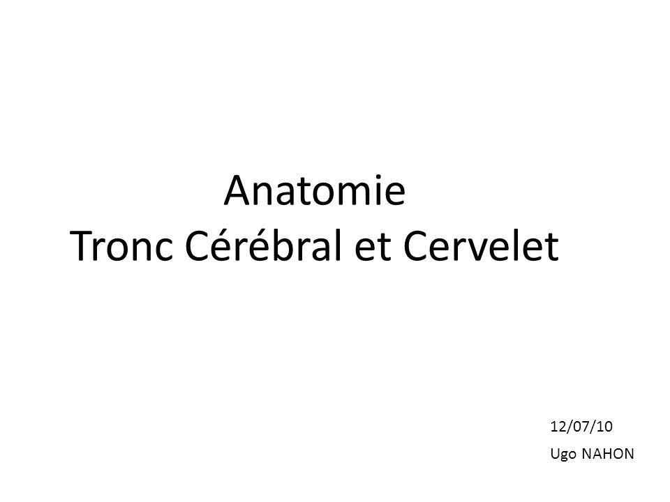Anatomie Tronc Cérébral et Cervelet