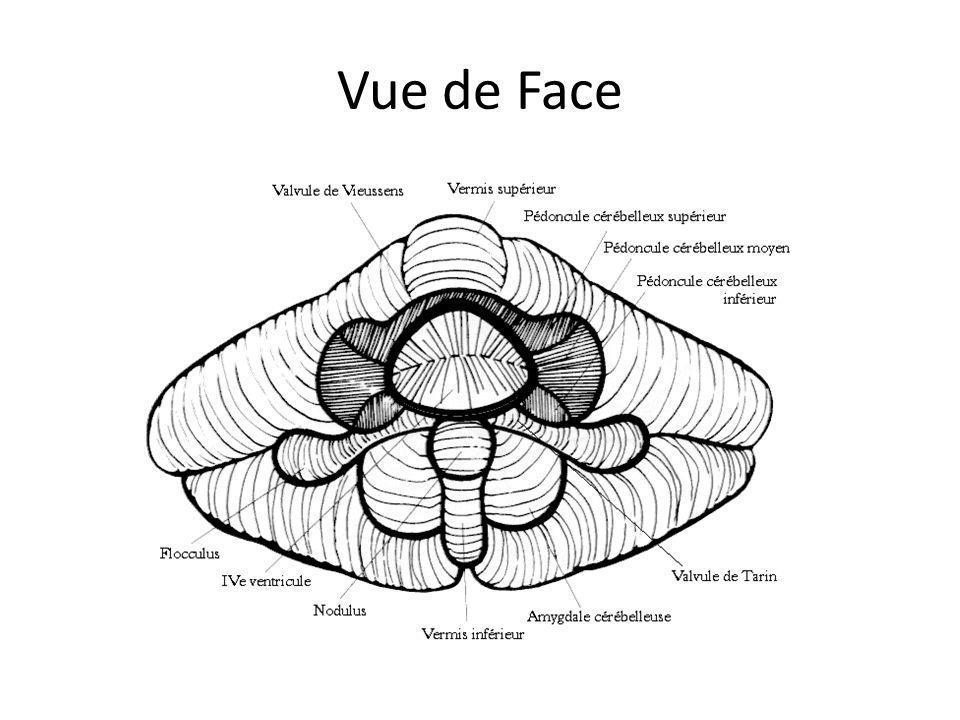 Vue de Face