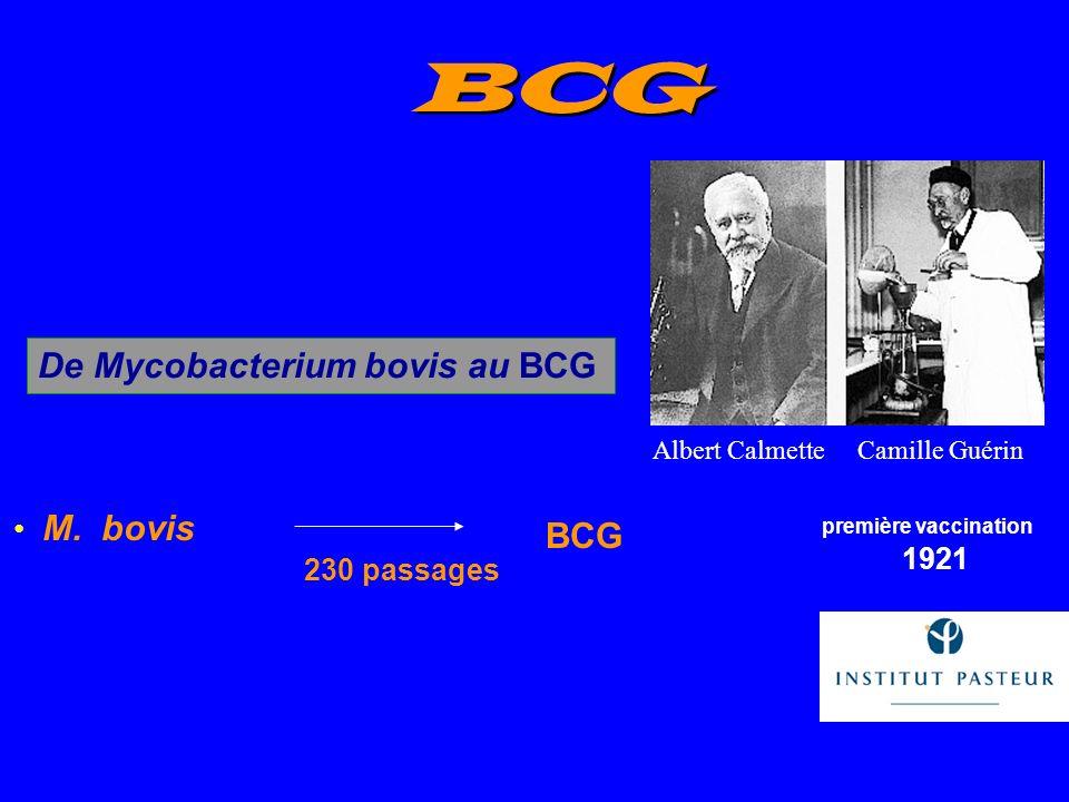 BCG De Mycobacterium bovis au BCG BCG M. bovis 230 passages