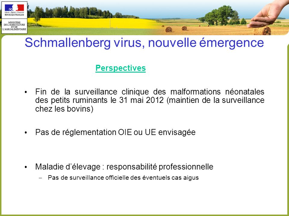 Schmallenberg virus, nouvelle émergence