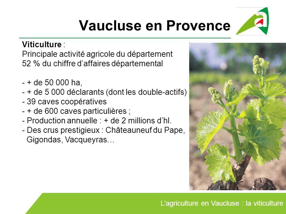 Vaucluse en Provence Viticulture :
