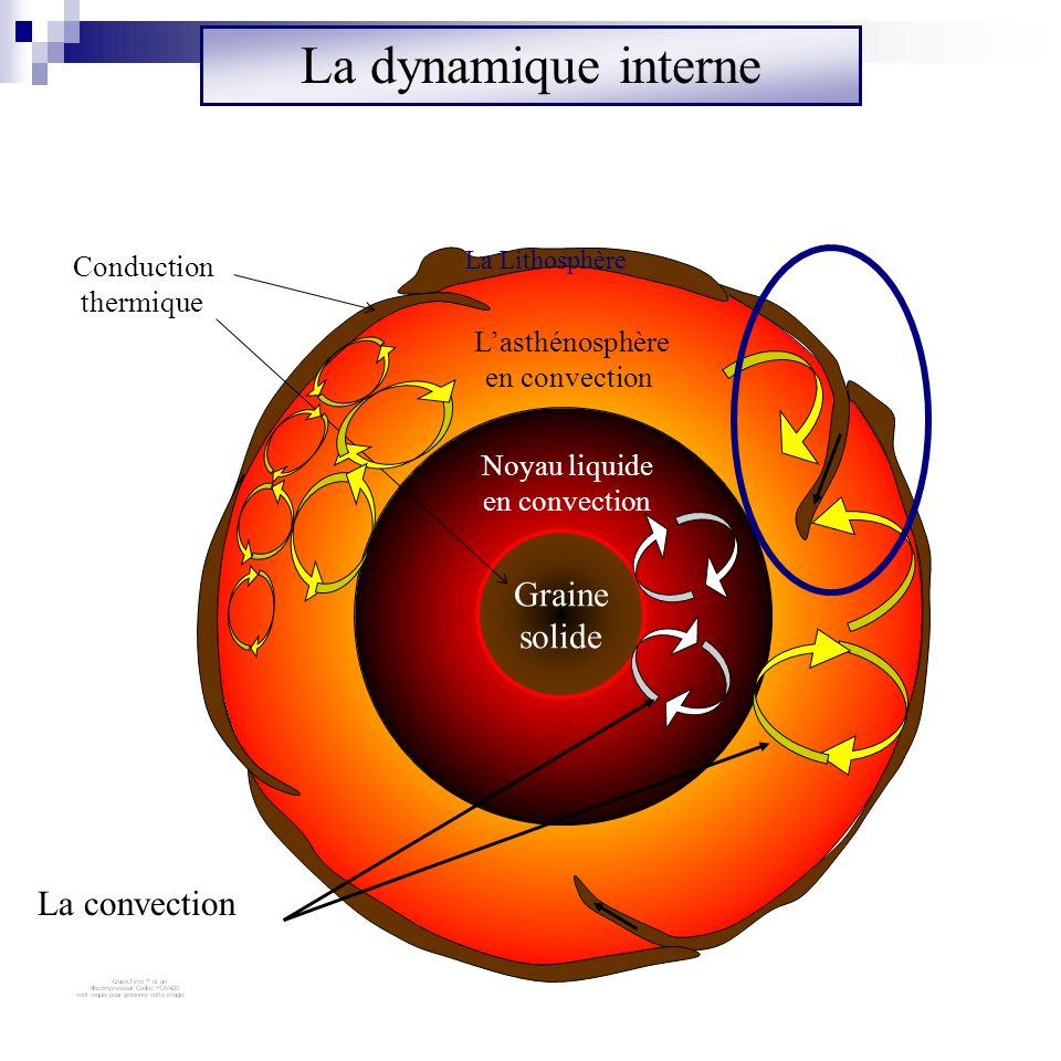 La dynamique interne Graine solide La convection Conduction thermique