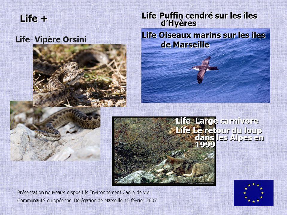 Life + Life Puffin cendré sur les îles d'Hyères