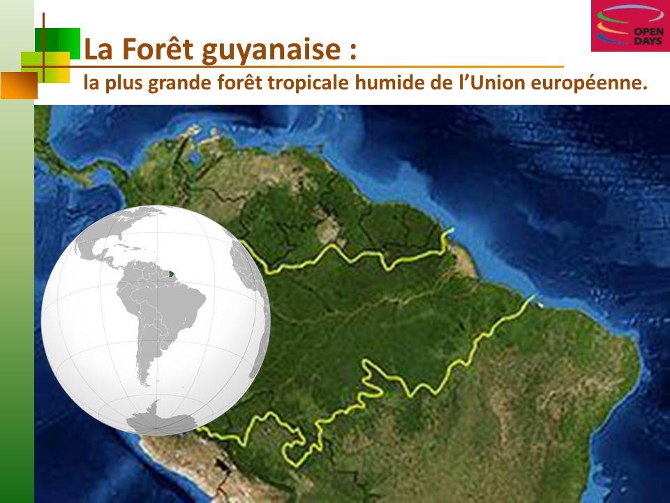 La Forêt guyanaise : la plus grande forêt tropicale humide de l'Union européenne.