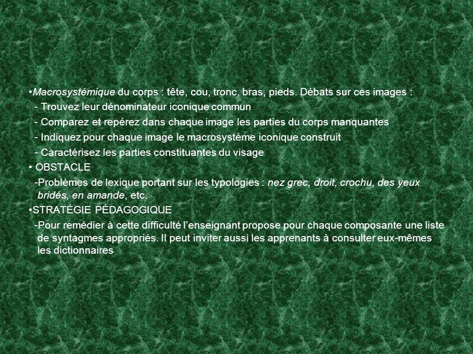 Macrosystémique du corps : tête, cou, tronc, bras, pieds
