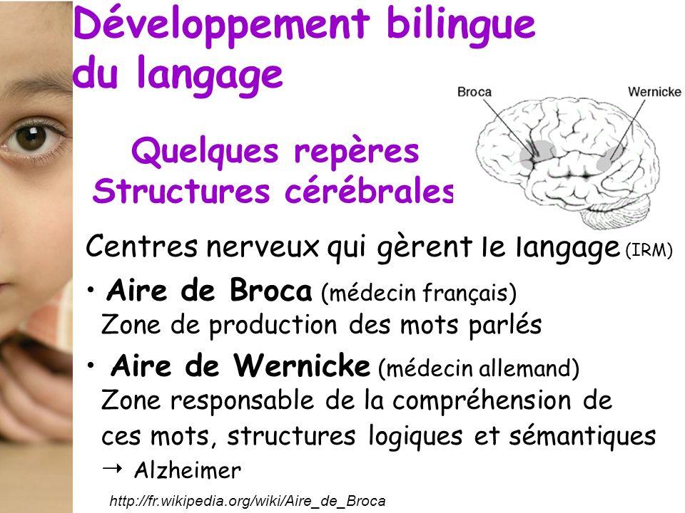 Quelques repères Structures cérébrales