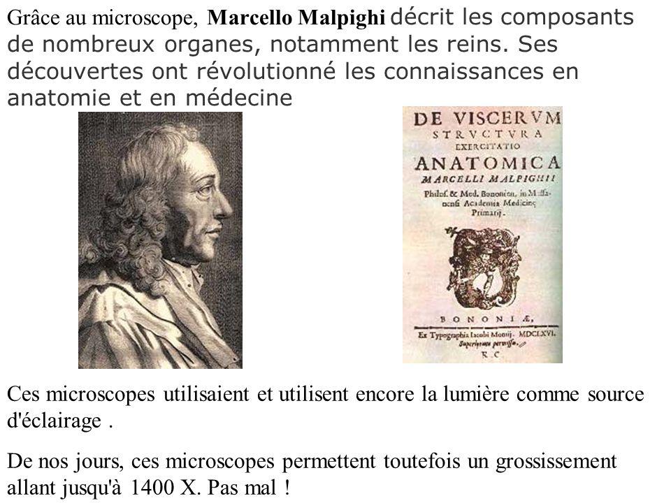 Grâce au microscope, Marcello Malpighi décrit les composants de nombreux organes, notamment les reins. Ses découvertes ont révolutionné les connaissances en anatomie et en médecine
