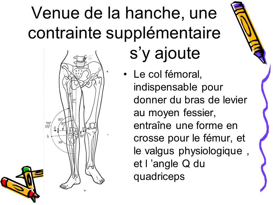 Venue de la hanche, une contrainte supplémentaire s'y ajoute