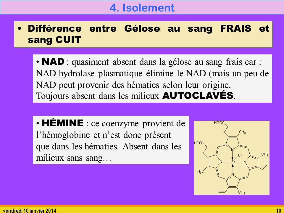 4. Isolement Différence entre Gélose au sang FRAIS et sang CUIT