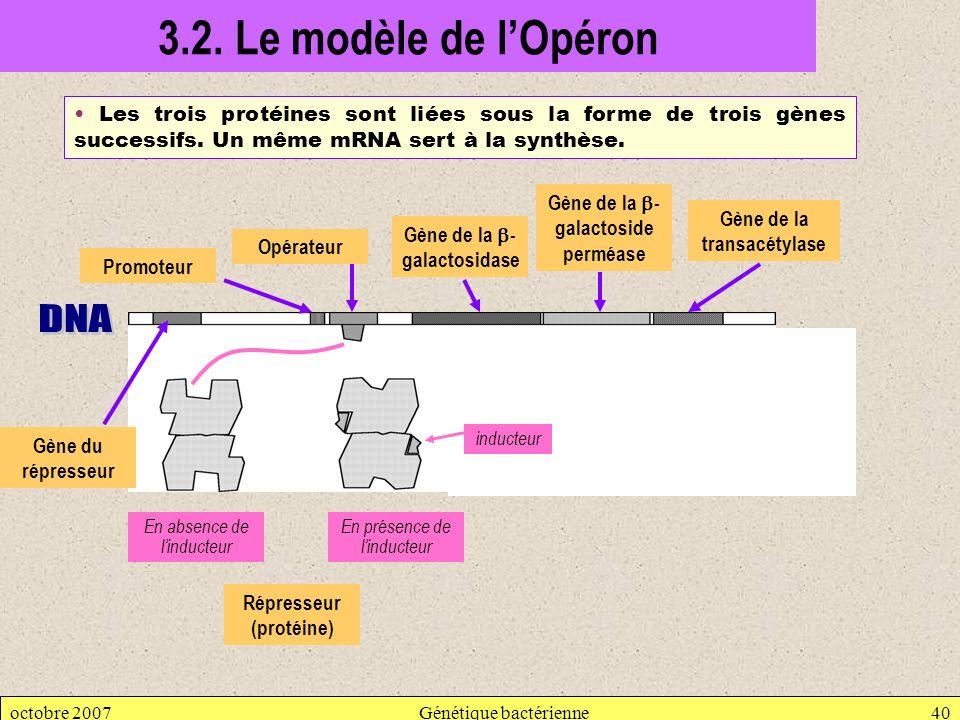 3.2. Le modèle de l'Opéron DNA