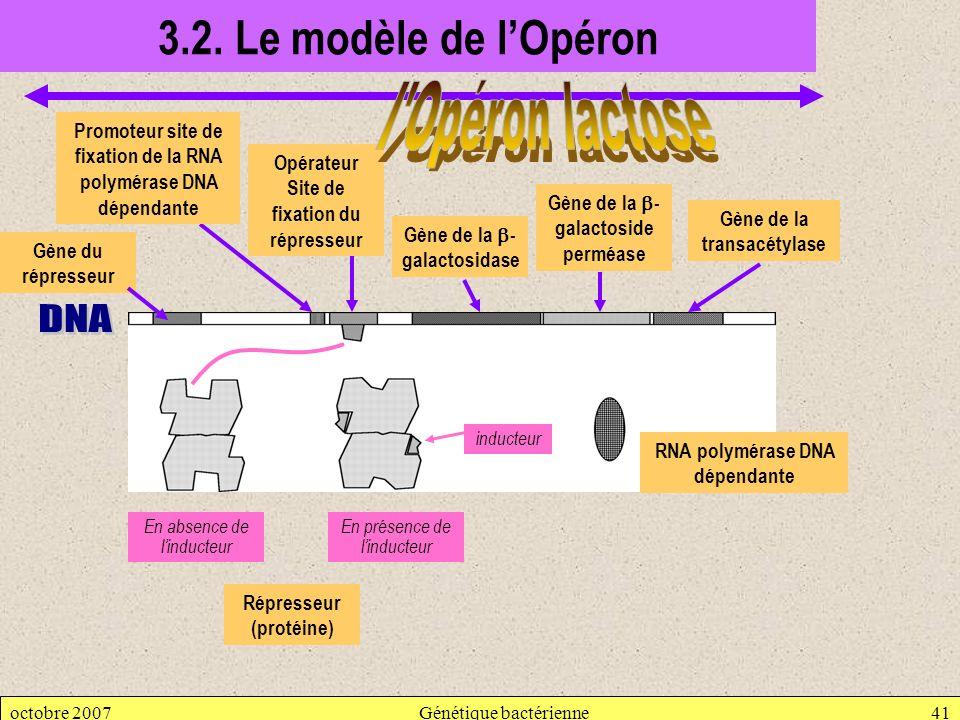 3.2. Le modèle de l'Opéron l Opéron lactose DNA