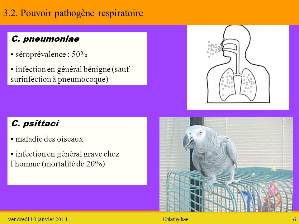 3.2. Pouvoir pathogène respiratoire