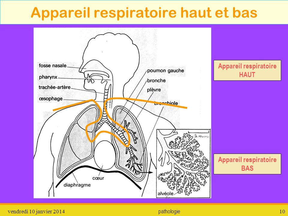 Appareil respiratoire haut et bas