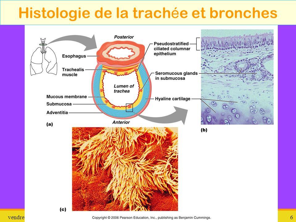 Histologie de la trachée et bronches