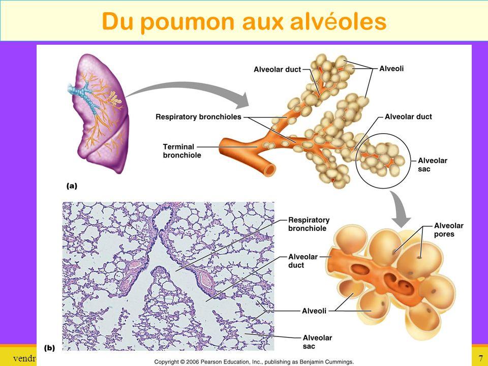 Du poumon aux alvéoles dimanche 26 mars 2017 pathologie