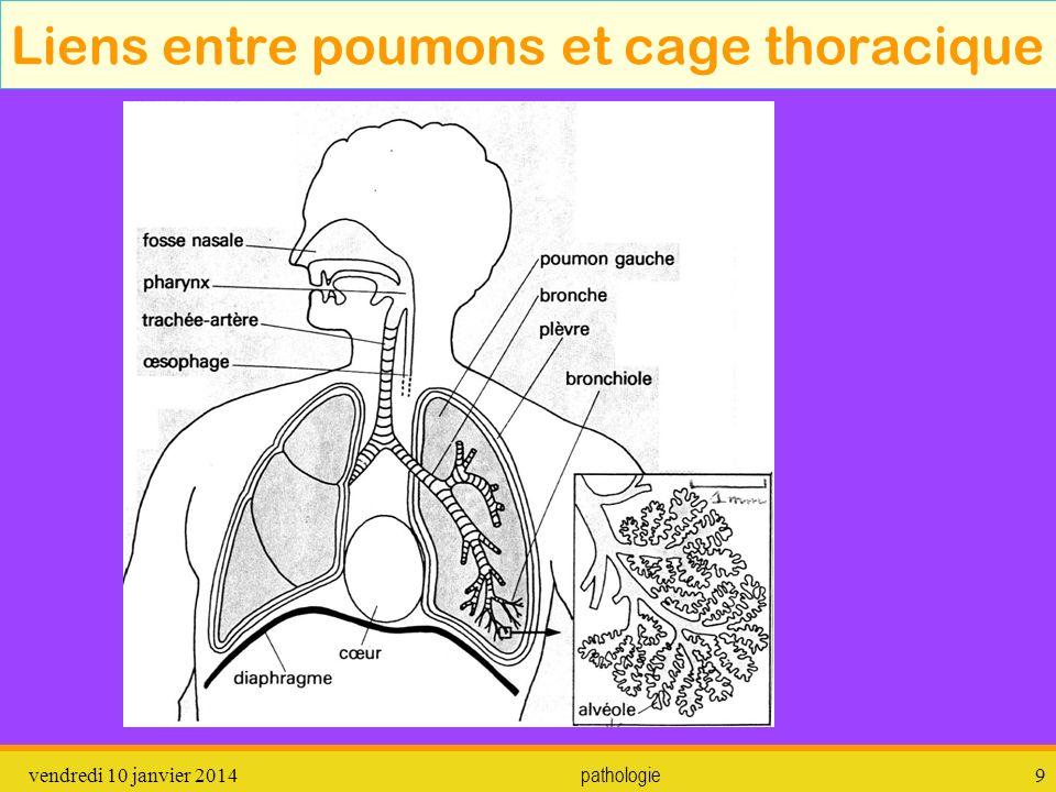Liens entre poumons et cage thoracique