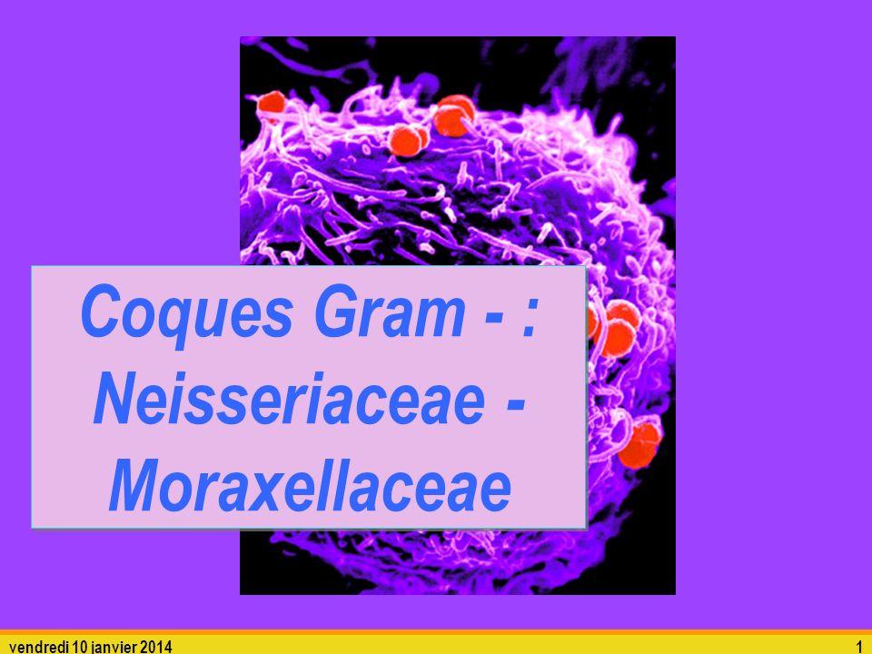 Coques Gram - : Neisseriaceae - Moraxellaceae