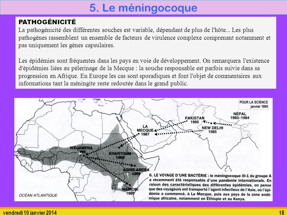 5. Le méningocoque 5.1. La bactérie PATHOGÉNICITÉ
