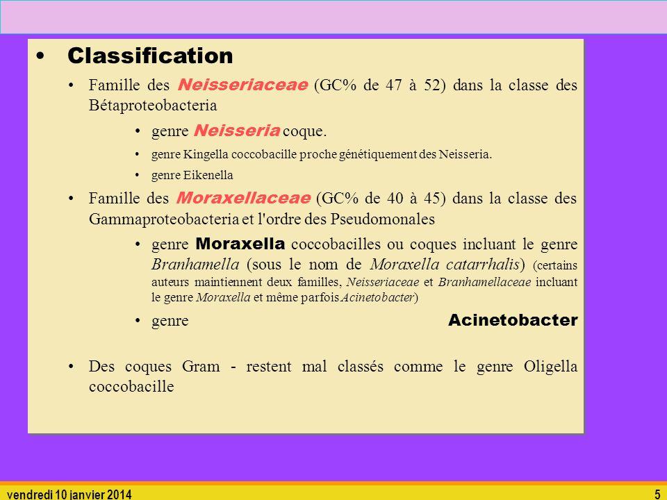 Classification Famille des Neisseriaceae (GC% de 47 à 52) dans la classe des Bétaproteobacteria. genre Neisseria coque.