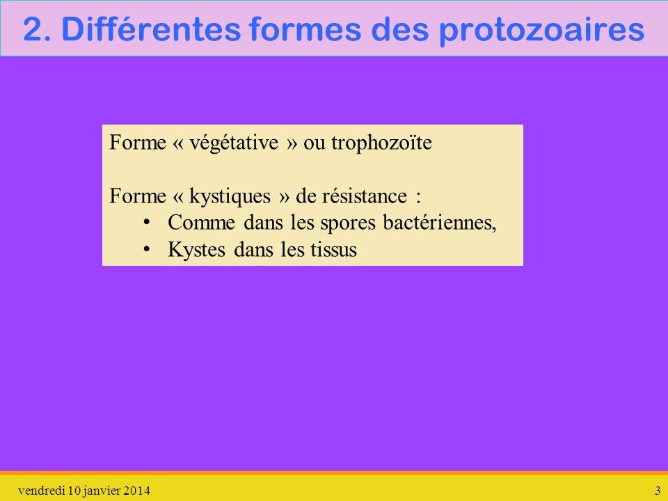 2. Différentes formes des protozoaires