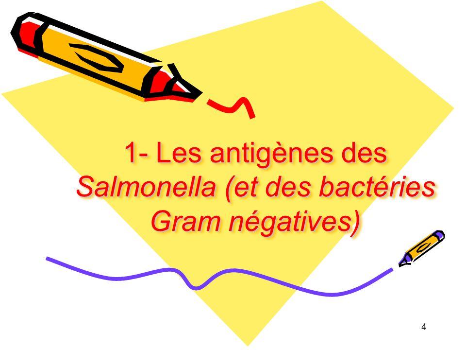 1- Les antigènes des Salmonella (et des bactéries Gram négatives)